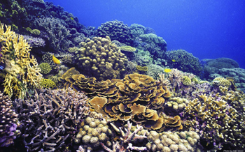 image-courtesy-of-jen-veron-corals-of-the-world