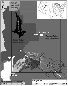 Figure 1 from our paper in Journal of Animal Ecology, depicting the study area and home range overlap between several female and male cougars. Artwork by Patrick Lendrum and Mark Elbroch / Panthera.
