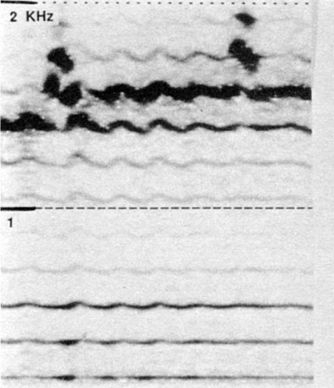 Fig. 39: Sigit tuva (cf. fig. 23). Ornements rythmiques «en ponctuations» sur H10, combinés avec du vibrato.