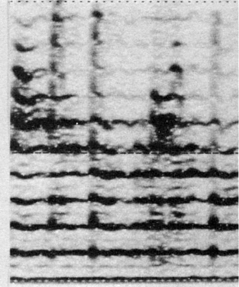 Fig. 40: Chant du Rajasthan (cf. fig. 27). Accents rythmiques marqués par des lignes verticales sur toute l'étendue du spectre.