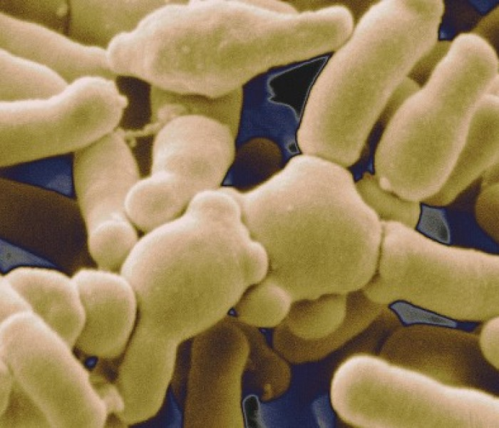 Gut Microbiome Determines Efficacy of Cancer Immunotherapy