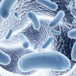 bacteria in the intestinal microbiota
