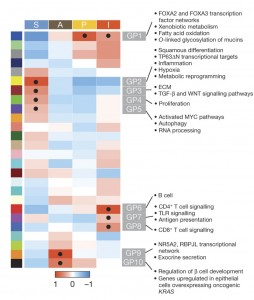 Heatmap of gene programmes significantly enriched in PDAC. Black dot denotes transcriptional networks showing highest significance for an individual class.