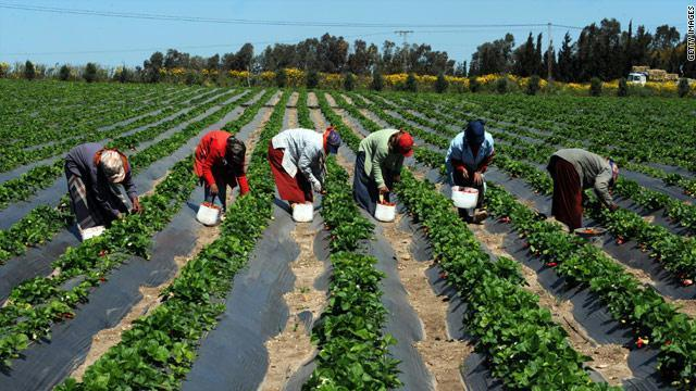 Une structure évoluant dans le domaine agricole/Résultat d'admissibilité au concours CGEA 2017/Kofi Annan sur la transformation agricole en Afrique