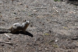 Blog-SSC_0580-300x200 Sequoia National Park: Giants Standing Guard