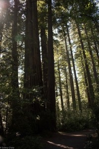 SSC_1145-200x300 Redwood National and State Parks Part One: Tallest Tree and Elk