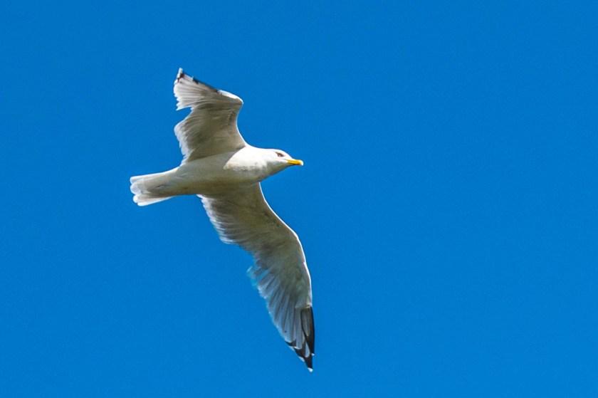 SSC_2666-1024x682 Voyageurs National Park: Lake Paradise