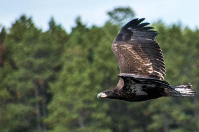 SSC_2703-1024x683 Voyageurs National Park: Lake Paradise