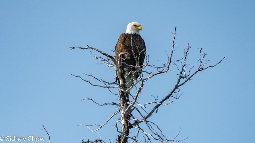SSO02112-1024x576 Lake Clark National Park: