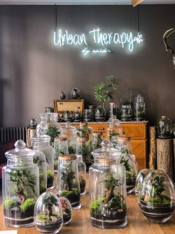 Urban Therapy, Brussels