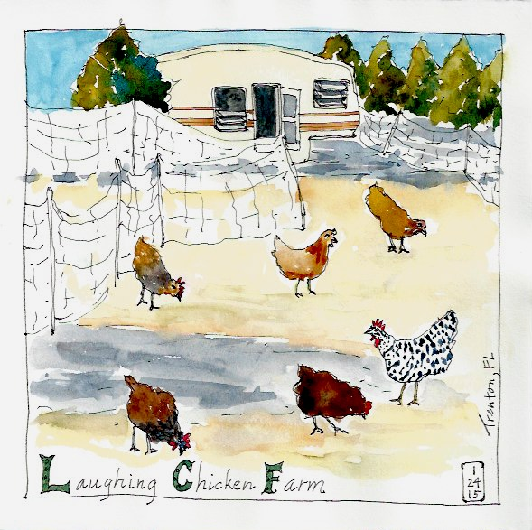 Laughing And Drawing At The Laughing Chicken Farm The Journey