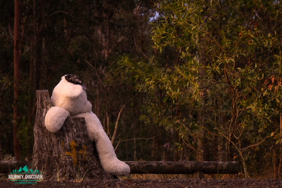 Giant White Teddy Bear Sits In A Tree Trunk