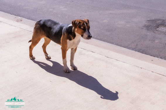 Dog In Cherbourg