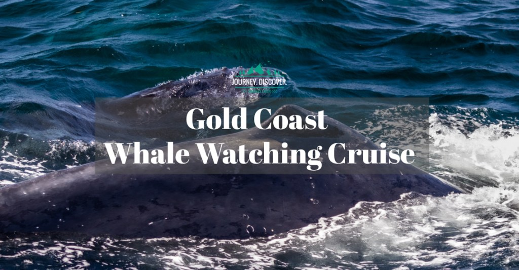 Gold Coast Whale Watching Cruise