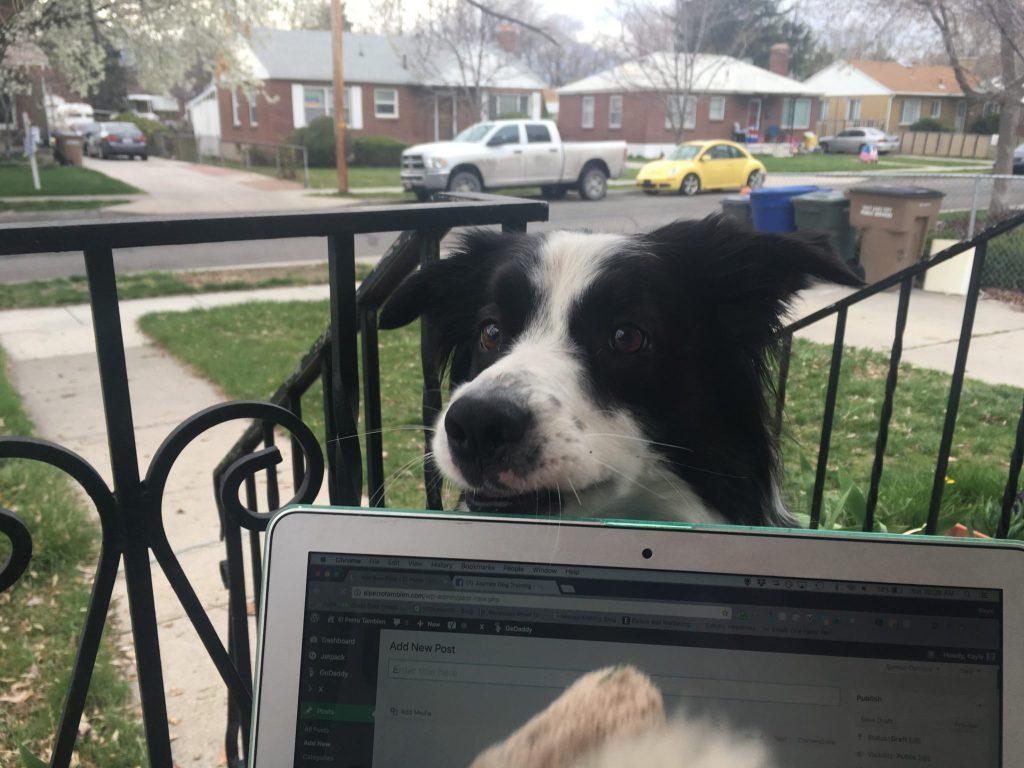 border collie laptop toy crazy dog