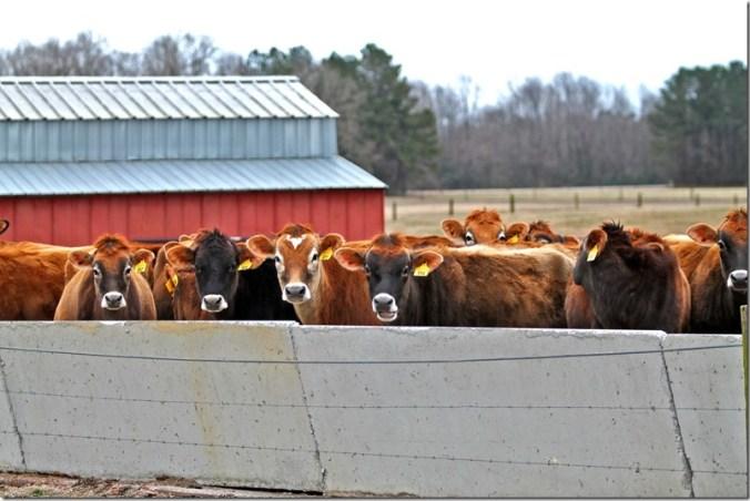 Bunn Farm