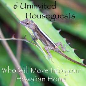 6UninvitedHouseguests