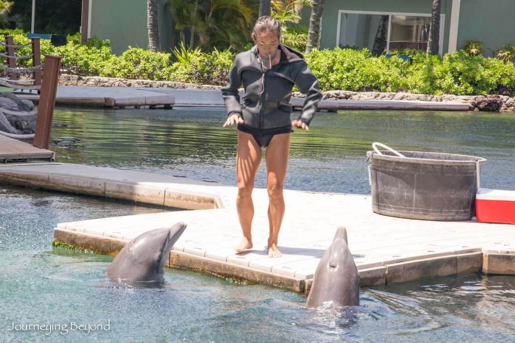 Dolphin Quest-4