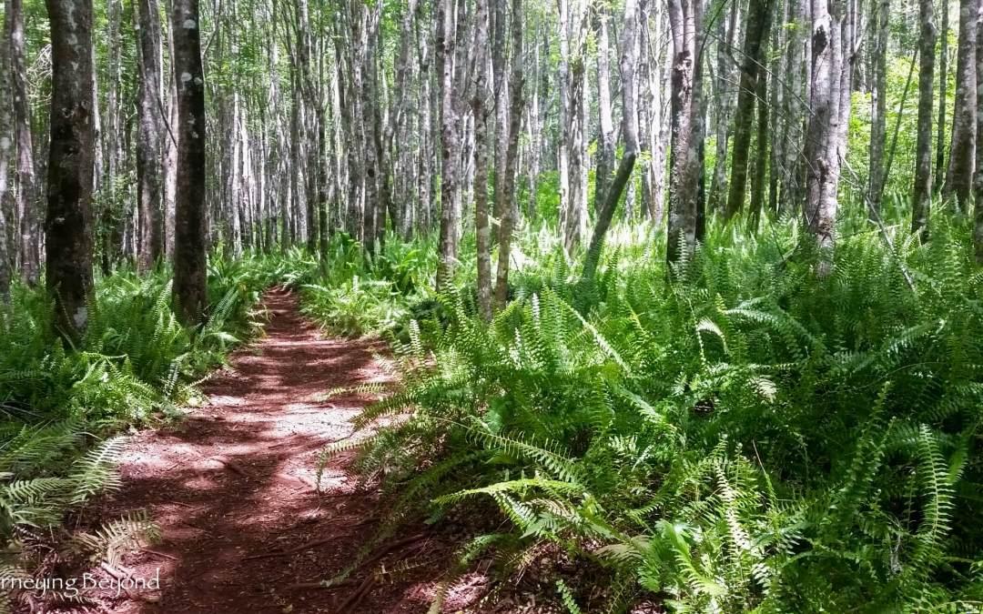 Kahakapao Trail – Makawao Forest Reserve