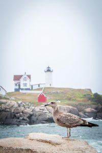 nubble-lighthouse-cape-neddick-light-york-maine