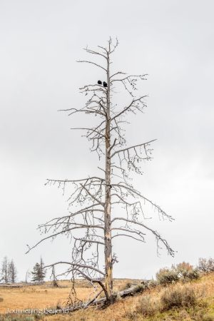 yellowstone-blizzard