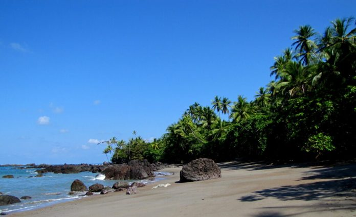 A beautiful sand beach that fringes Corcovado National Park, part of one of the best places to see monkeys in Costa Rica