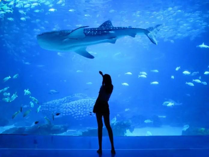 Rio de Janeiro Marine Aquarium