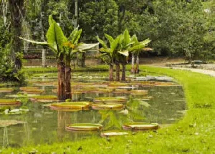 Jardim Botanical Gardens