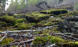 Rocks covered with moss