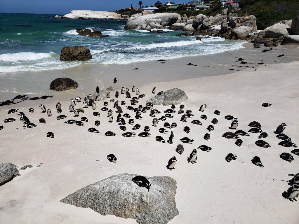 penguins resting on white sand near blue ocean
