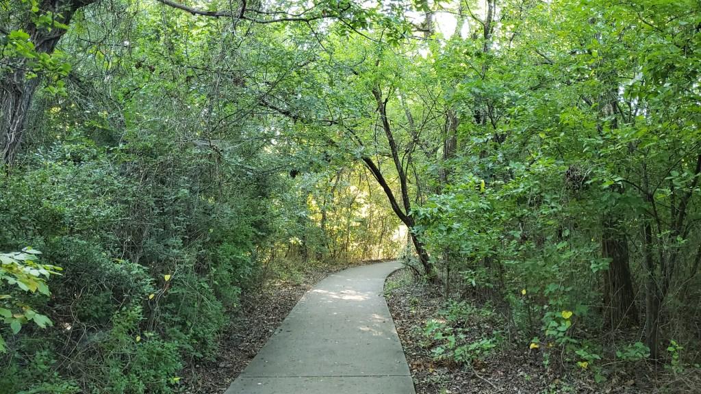 greenery surrounding walking trail
