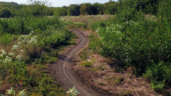 The trail path at Northwest Community Park