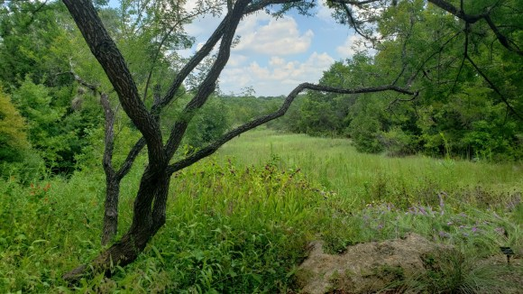 View from the Lady Bird Johnson Wildflower Center