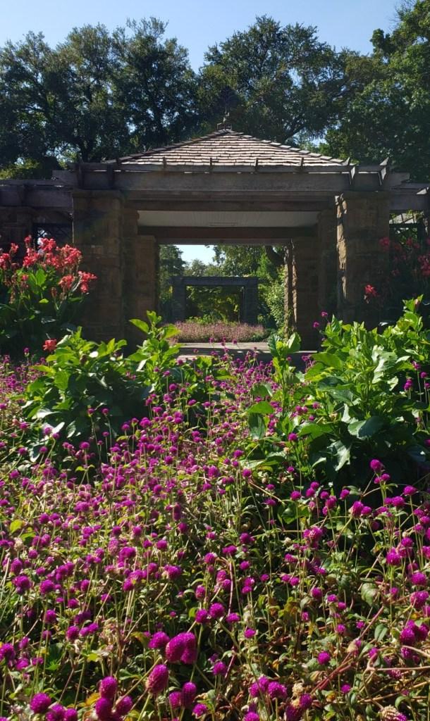 Splash of color at the Oval Rose Garden
