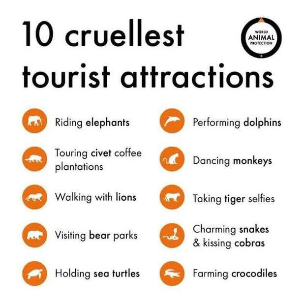 Image result for most cruel animal tourism