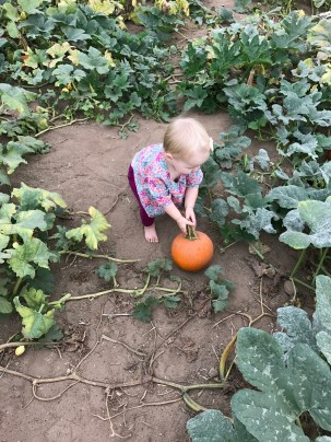 """Picking"" her pumpkin."