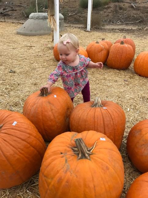 She really liked patting the big pumpkins.