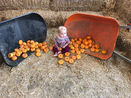 An old man gave her more pumpkins and she mean-mugged him afterward.