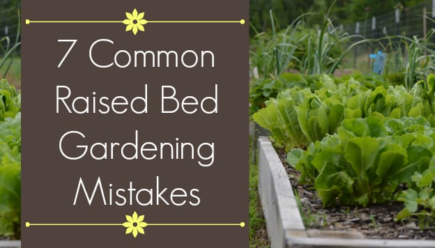 7 Common Mistakes In Raised Bed Gardening The Beginner S