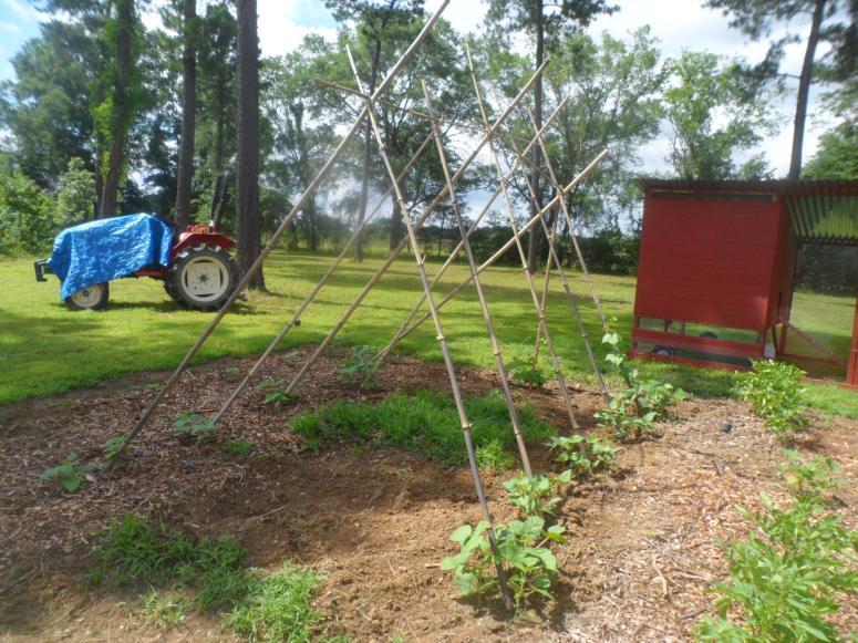Bamboo Garden Trellis