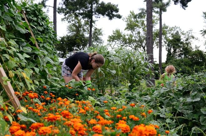 Marigolds deter unwanted pests
