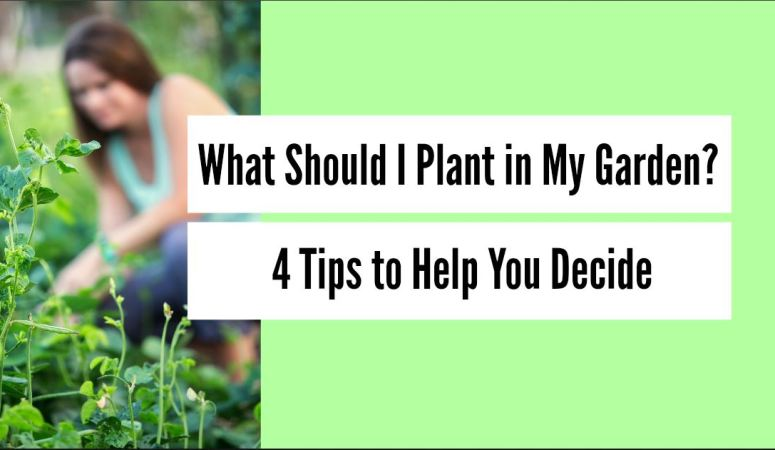 4 tips to help you decide what to plant in your garden