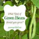 What Kind of Green Beans Should You Grow?