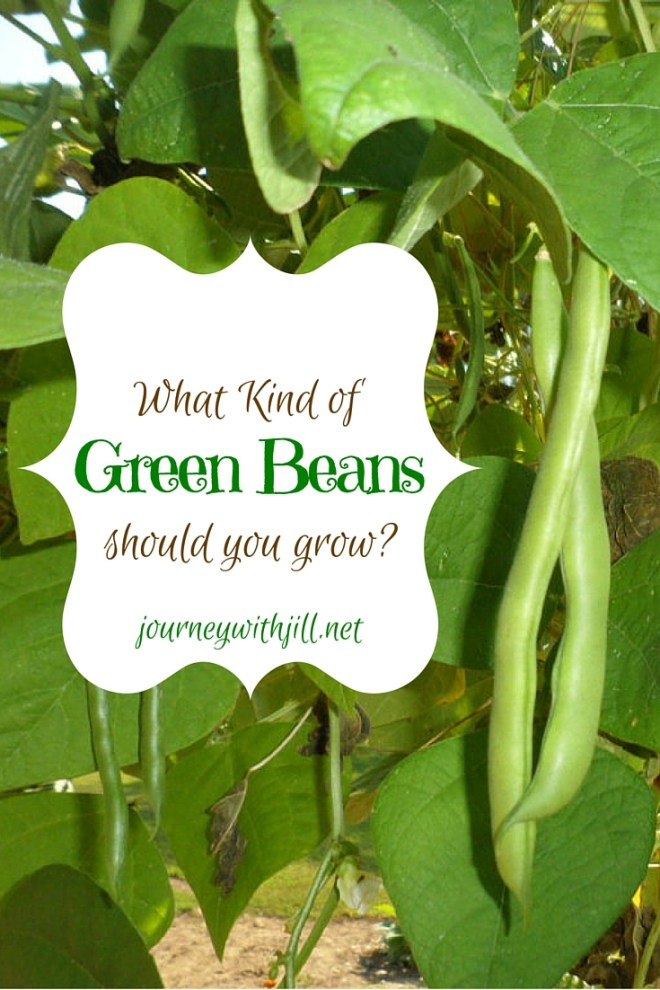 What Kind of Green Beans to Grow | Journey with Jill