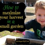 How to Maximize Your Harvest in a Small Garden Space