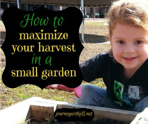 Small Space Gardening | Journey with Jill