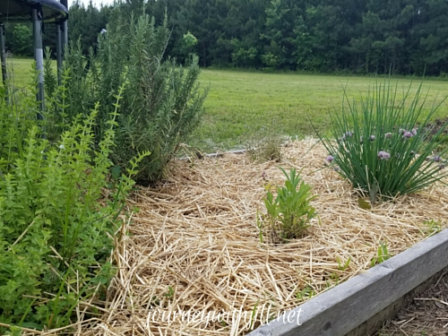 Straw as Mulch in Your Garden