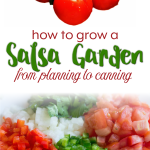 How to Grow a Salsa Garden from Planning to Canning {FREE Download}
