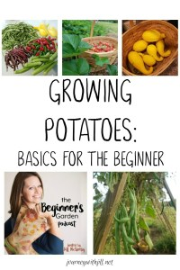 Growing Potatoes: Basics for the Beginner