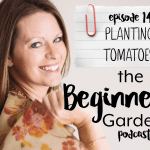 Planting Tomatoes {Beginner's Garden Podcast}